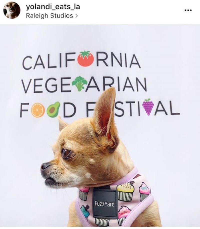 All About Animals at this Year's CA Veg Food Festival